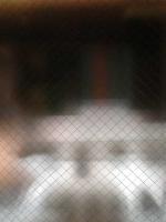 http://hebiinu.com/files/gimgs/th-19_19_no1-tokyo-vinduer-0208-6627.jpg
