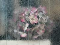 JAPAN WINDOWS
